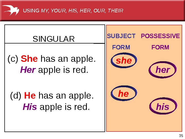 35(c)  She  has anapple.  Her appleisred. (d)  He hasanapple.  His appleisred.