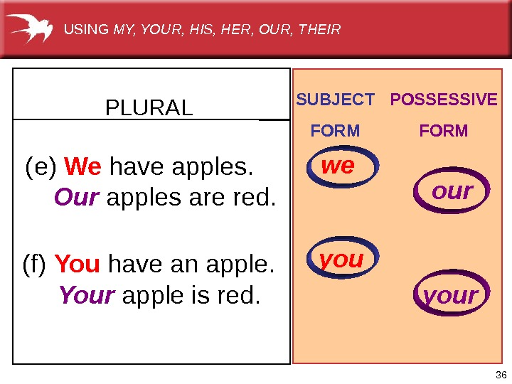 36(e)  We have apples.  Our applesarered. (f)  You haveanapple.  Your appleisred. PLURAL