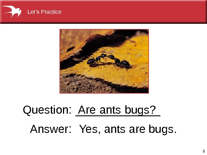 9 Are  ants  bugs? Question : ______ Answer :  Yes, antsarebugs. Let's. Practice