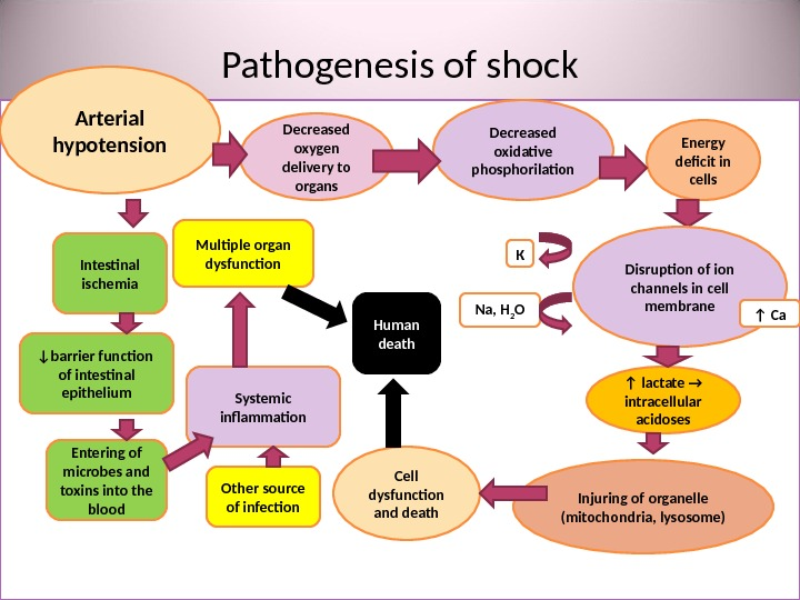 Pathogenesis of shock • утрата Arterial hypotension Decreased oxygen delivery to organs Decreased oxidative phosphorilation Energy