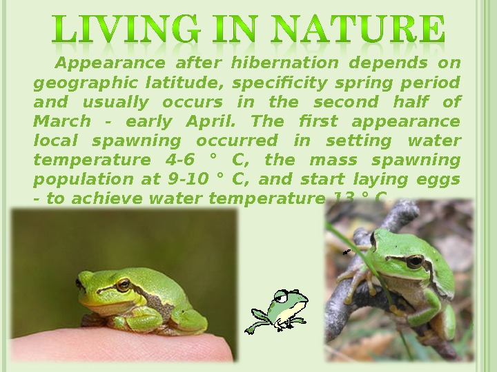 Appearance after hibernation depends on geographic latitude,  specificity spring period and usually occurs