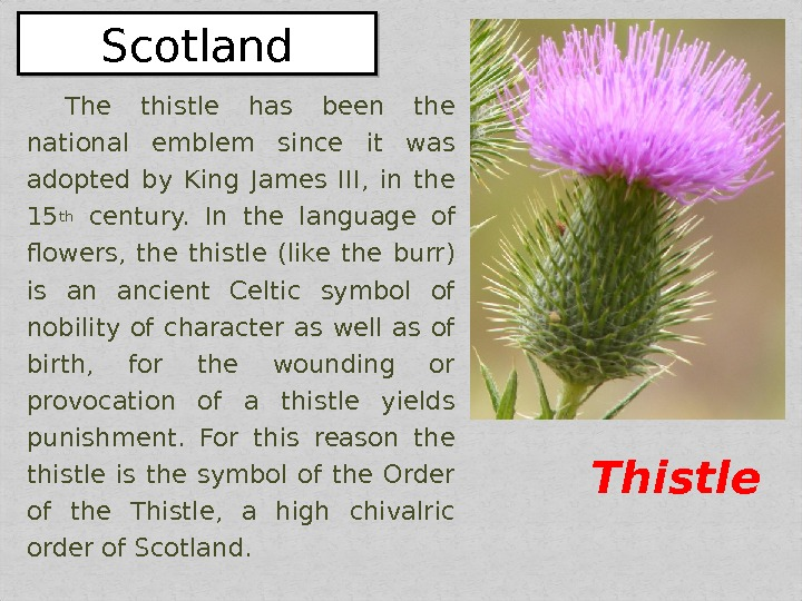 The thistle has been the national emblem since it was adopted by King James III,