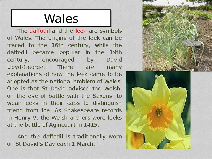 The daffodil  and the leek  are symbols of Wales.  The origins of the