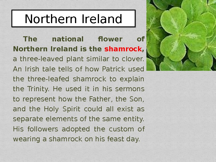 The national flower of Northern Ireland is the shamrock ,  a three-leaved plant similar to