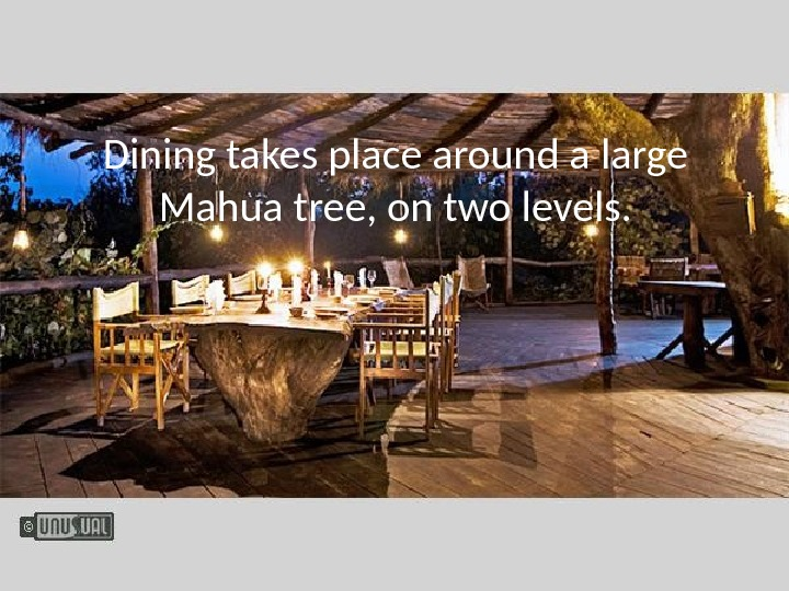 Dining takes place around a large Mahua tree, on two levels.