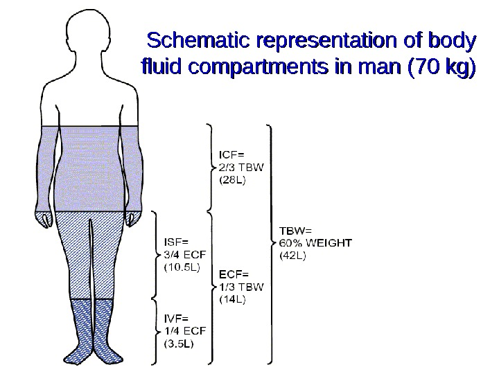 Schematic representation of body fluid compartments in man (70 kg)