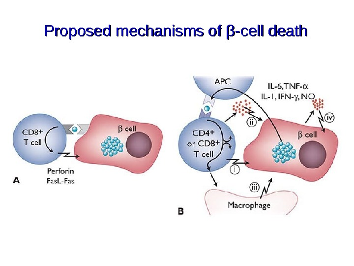 Proposed mechanisms of ββ -cell death