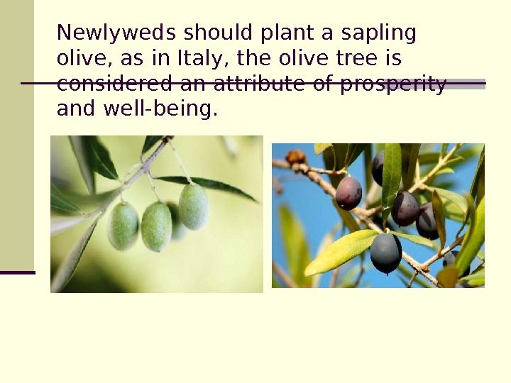 Newlyweds should plant a sapling olive, as in Italy, the olive tree is considered