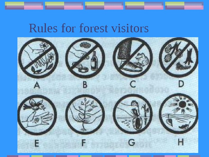 Rules forest visitors