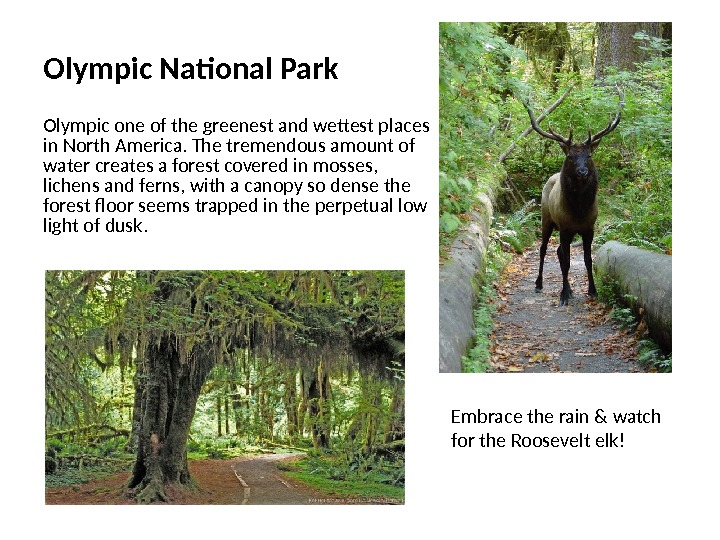 Olympic National Park Olympic one of the greenest and wettest places in North America. The tremendous