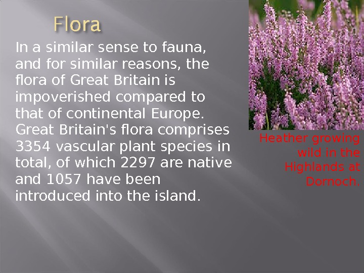 In a similar sense to fauna,  and for similar reasons, the flora of Great Britain