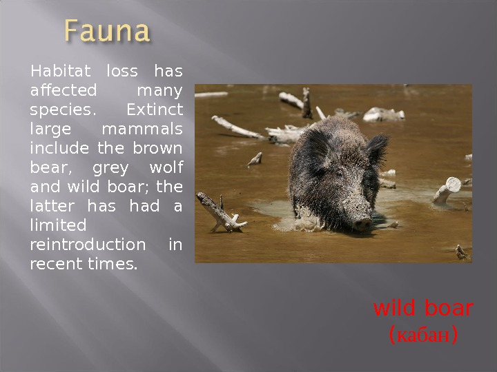 Habitat loss has affected many species.  Extinct large mammals include the brown bear,  grey
