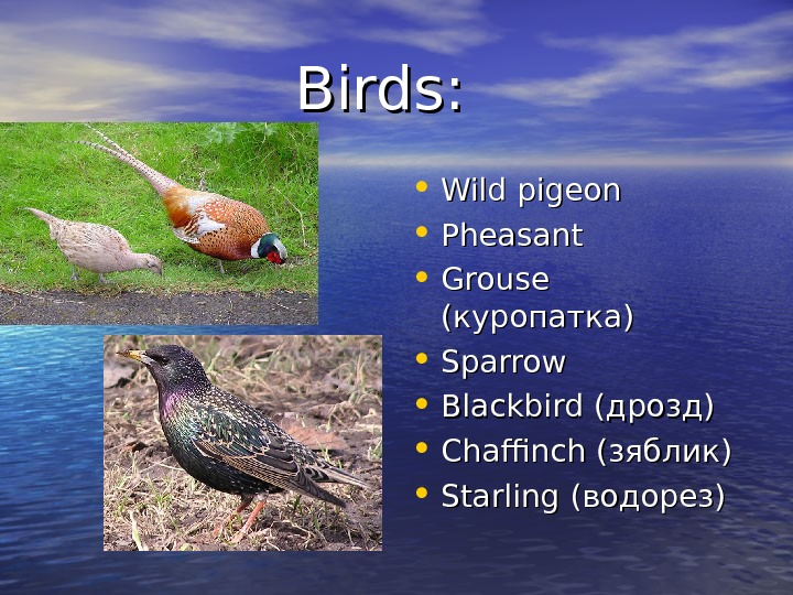 Birds:  • Wild pigeon • Pheasant • Grouse