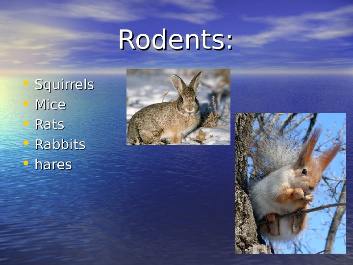 Rodents:  • Squirrels • Mice • Rats • Rabbits