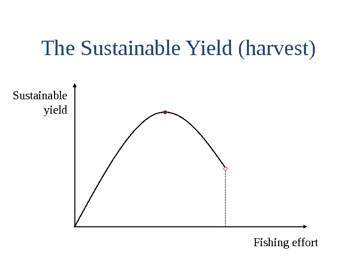 The Sustainable Yield (harvest) Sustainable  yield Fishing effort
