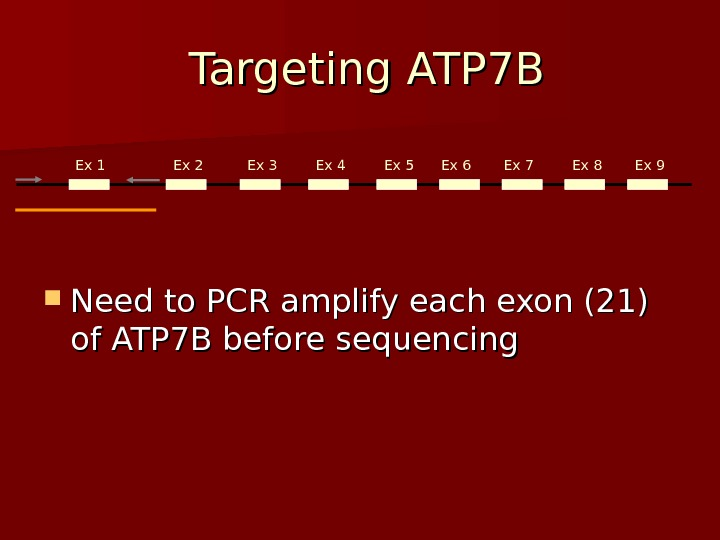Targeting ATP 7 B Need to PCR amplify each exon (21) of ATP 7