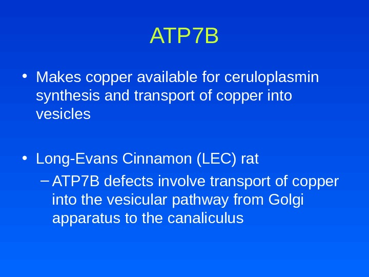 ATP 7 B • Makes copper available for ceruloplasmin synthesis and transport of copper into vesicles