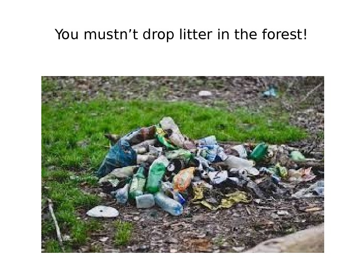 You mustn't drop litter in the forest!