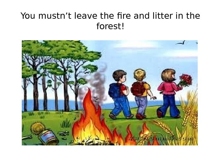You mustn't leave the fire and litter in the forest!