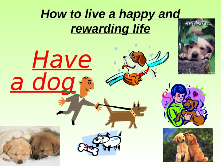How to live a happy and rewarding life Have a dog