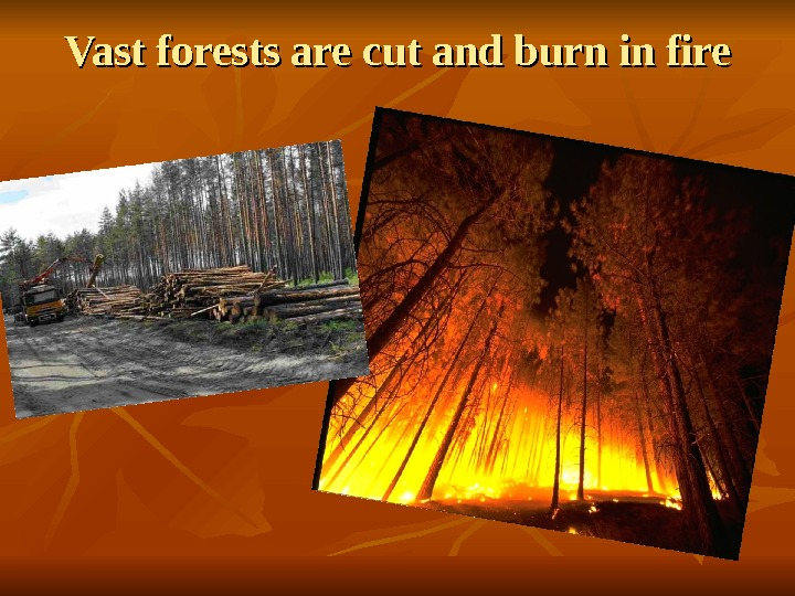 Vast forests are cut and burn in fire