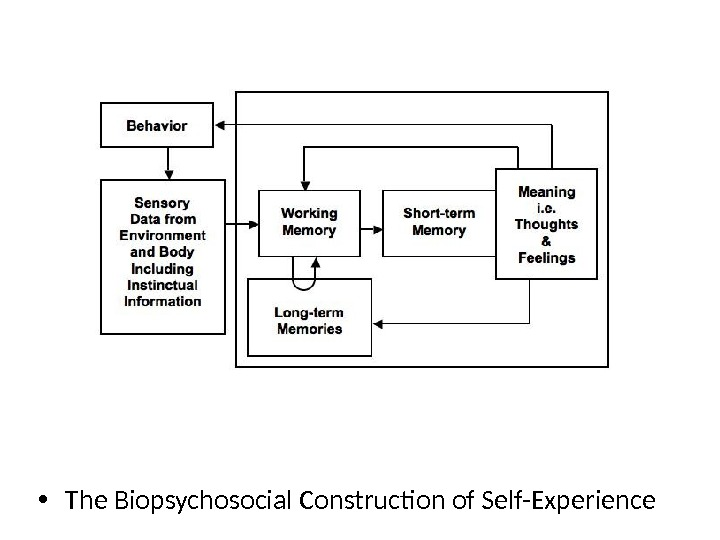 The Biopsychosocial Construction of Self-Experience • The Biopsychosocial Construction of Self-Experience