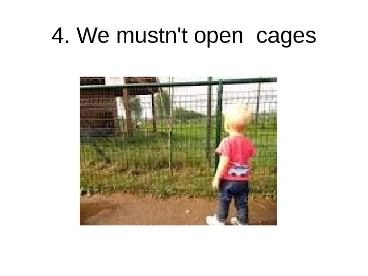 4. We mustn't open cages