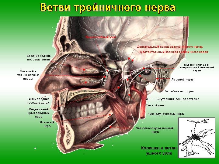 Дарсонваль тройничный нерв