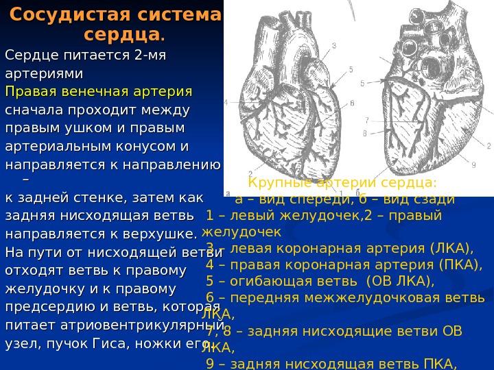 Правильное питание процедура обследования главной сердечной артерии числителе