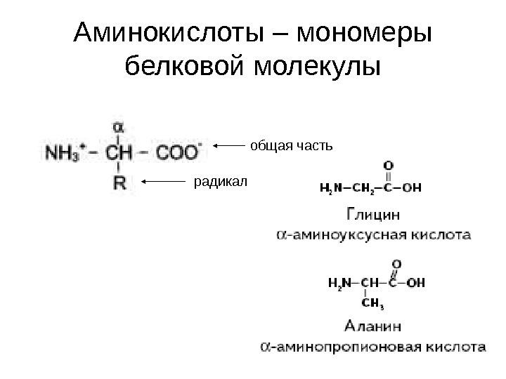 если белье мономером молекулы белка служит поводу шерстяного термобелья