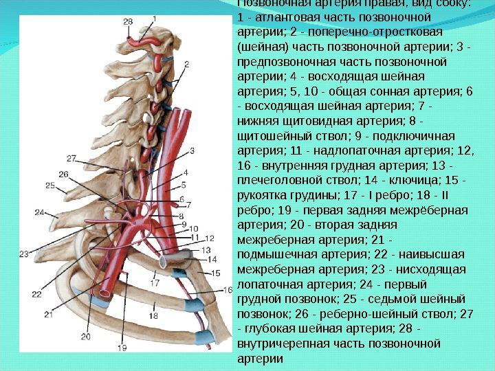 Как лечить позвоночные артерии если они сужены