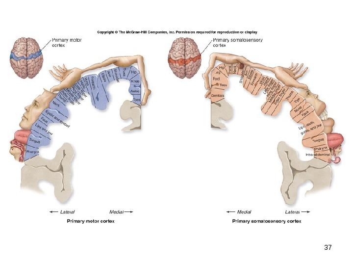 Neuro enhancing fur schuler picture 2
