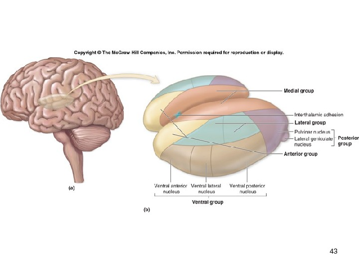 Mckinley human anatomy