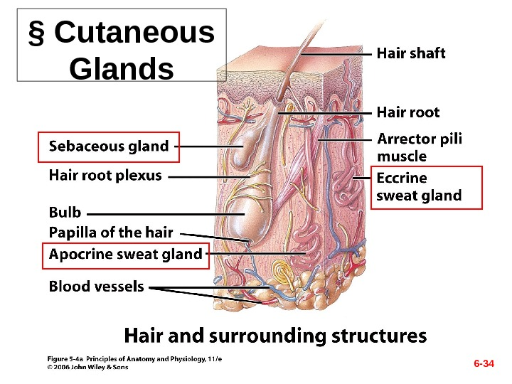 the hair follicle stem cell niche Hair stem cells born without a home the origin of adult hair follicle stem cells and delineates cellular stem cell pool and surrounding niche.