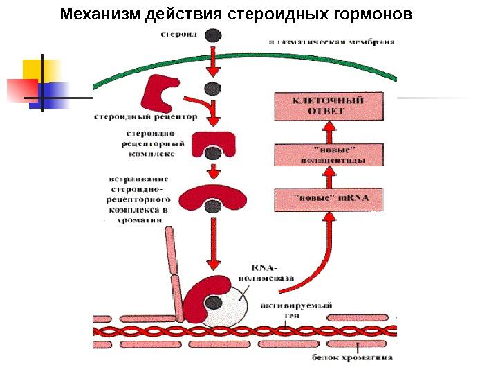 признаки холестерина в крови
