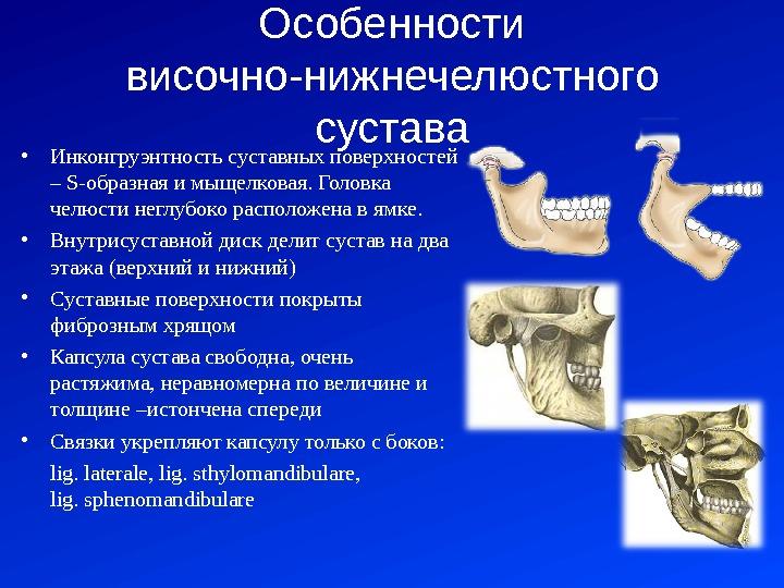 височно-нижнечелюстной сустав и его функции