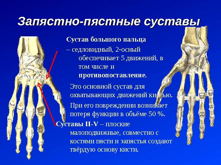 Купить АРТРОПАНТ в Красноярске 🏥 в Аптеке №5 | Цена 990 руб.