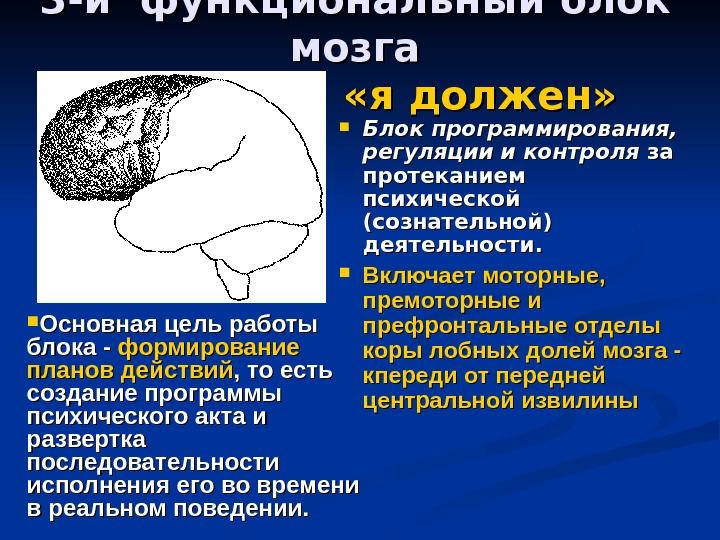 Высшие психические функции не связаны с мозгом