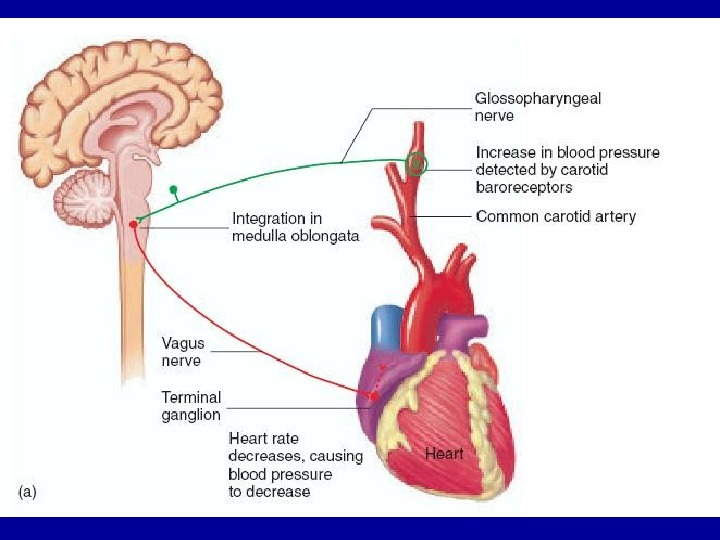 паравертебральные инъекции