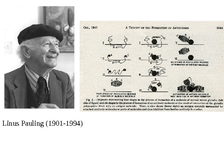 a biography of linus carl pauling a chemist and physicist