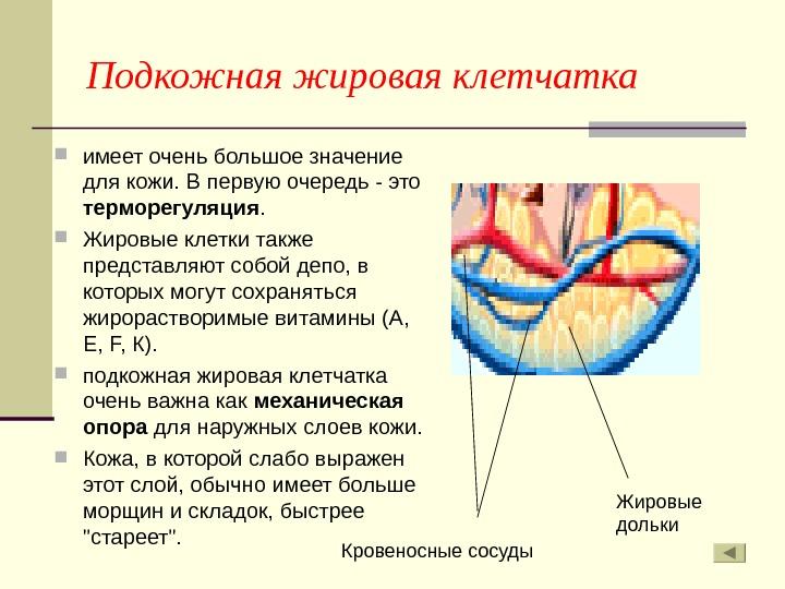 Жировая ткань латинский