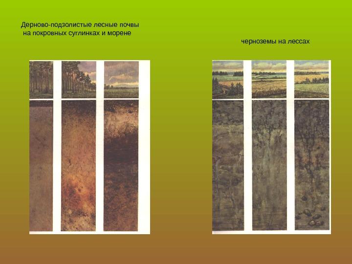 подрезайте боковые, дерново подзолистые почвы белоруссии пяти букв первая