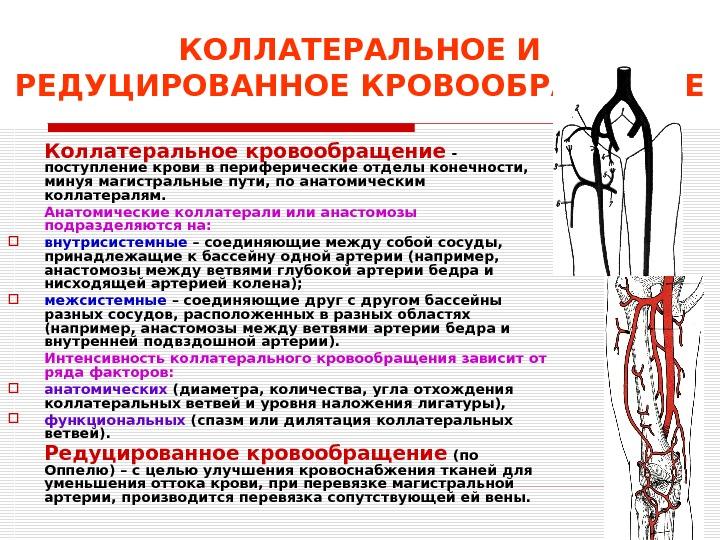 кровообращение в бедренном суставе