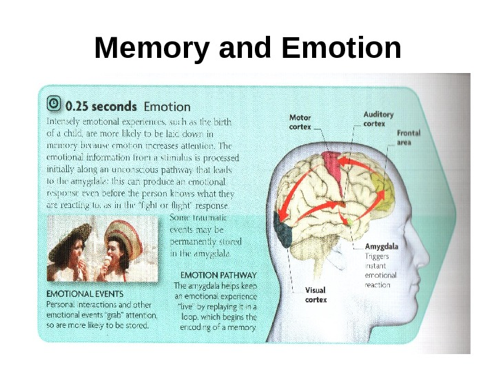 emotions and memory Emotion involves the entire nervous system the limbic system and the autonomic nervous system (long-term memory.