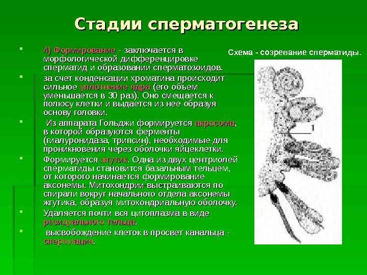 intimniy-vzroslie-muzhiki-foto