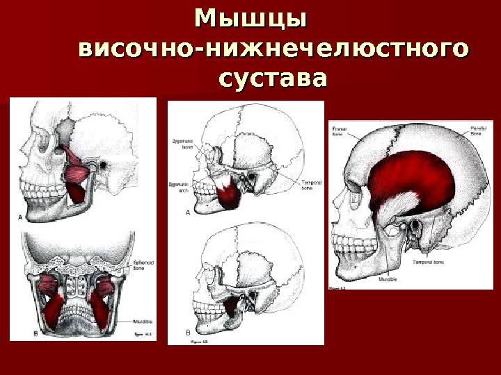 прикладной кинезиологии занько в а