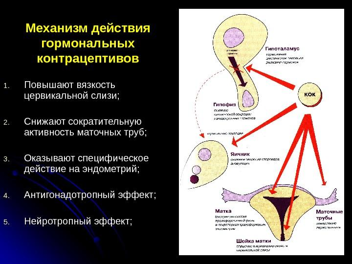 gormon-v-sperme