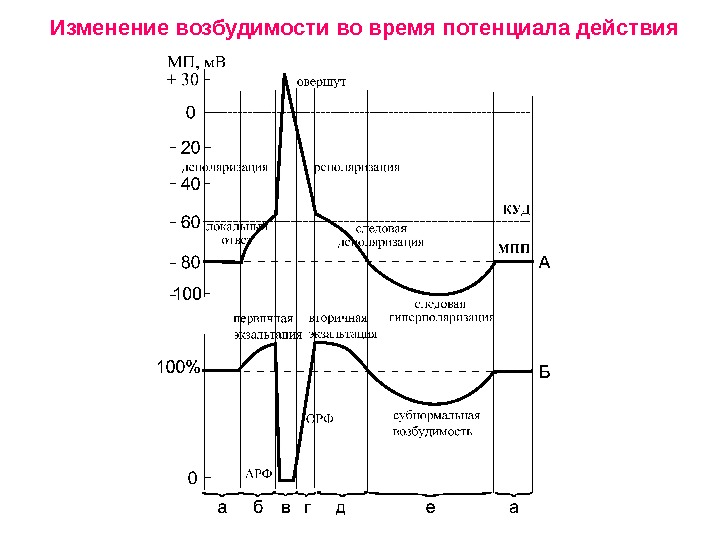 Учебно-методический комплекс по дисциплине физиология