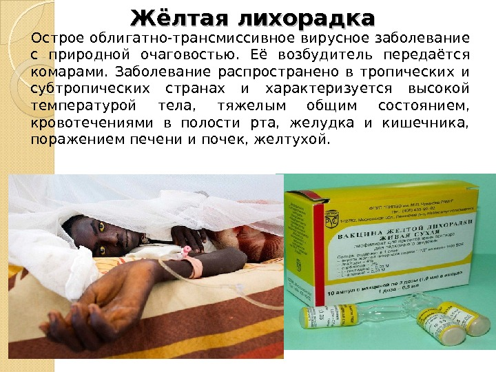 Ebolavirus  Википедия