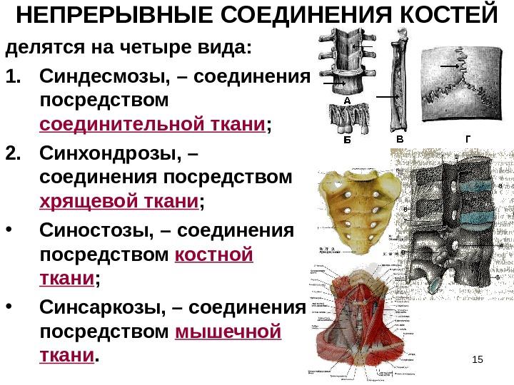 типы соединения костей суставы